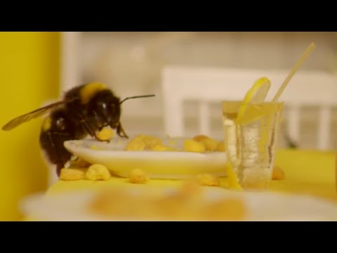 Wes Anderson Themed HOTEL FOR BEES? | What's Trending Now