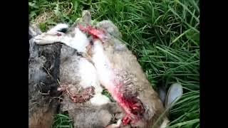 Защитникам бродячих собак посвящается документальный фильм
