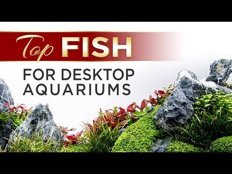 Top Fish For Desktop Aquariums
