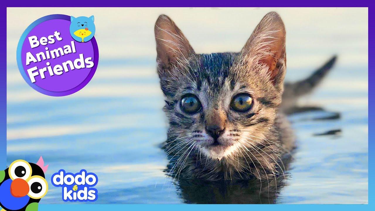 This Kitten's Best Friend Showed Her How To Swim!   Best Animal Friends   Dodo Kids