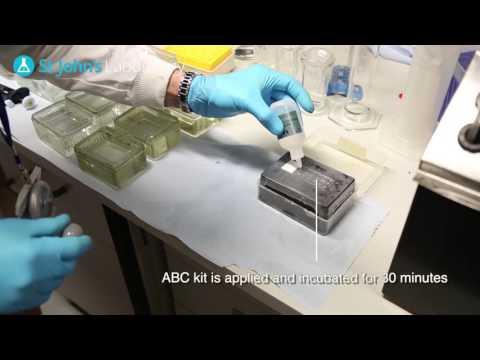 ImmunoHistoChemistry (IHC) - Video Protocol Series