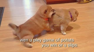 Game of Potats - haus lion-ster vs haus tiger-yan / Shiba Inu puppies (with captions)