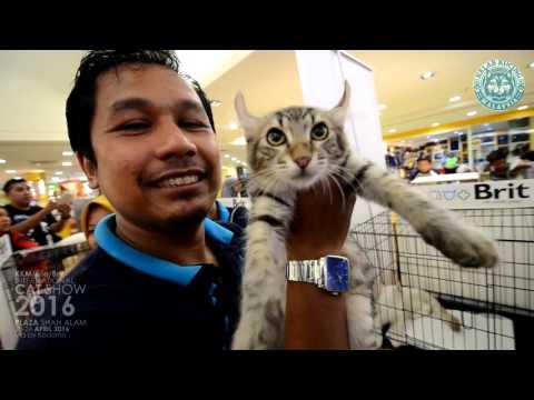 Kelab Kucing Malaysia \ Fife \ Brit International Cat Show 2016 @Plaza Shah Alam