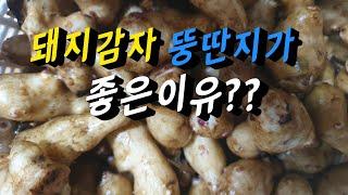 """뚱딴지  # 돼지감자효능  #천연인슐린 """"이눌…"""