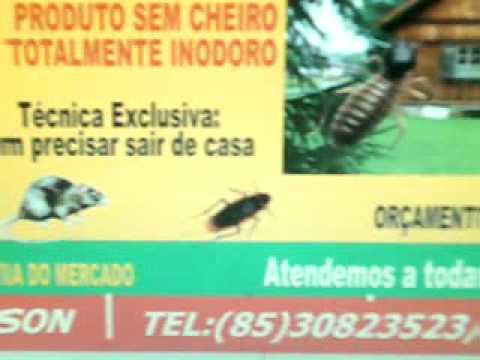 Dedetizadora em Maracanaú Fortal8530823523