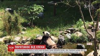У Китаї панди борються зі спекою у прохолодних ваннах
