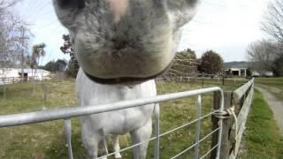 Horse vs Gopro
