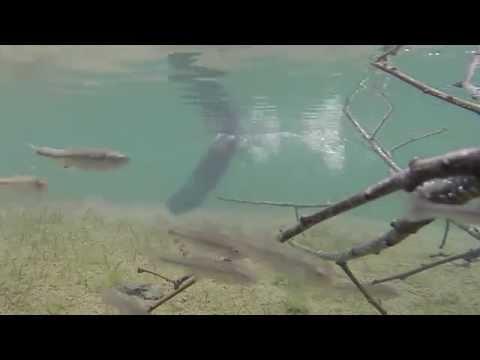 underwater pond : bass, minnows, muskrat