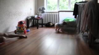 видео Что делает ребенок в 10 месяцев