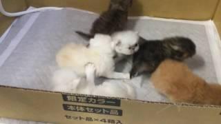 猫は小さなころからの「しつけ」が必要です。 CatCoinでは東海地区で唯...