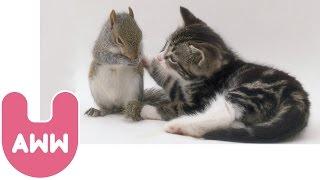 Cat Adopts Baby Squirrels thumbnail