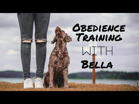OBEDIENCE WITH BELLA - PORTUGUESE WATER DOG
