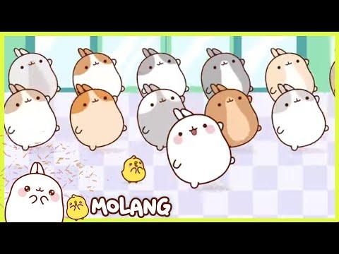 Molang - Flash Mob | Comedy Cartoon | More ⬇️ ⬇️ ⬇️
