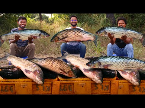 Amazing Fish Curry Recipe | Traditional Fish Recipe By Grandpa Kitchen