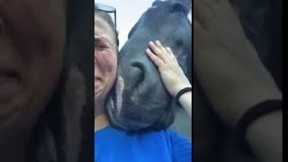 Ağlayan Kadını Teselli Eden At
