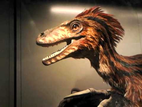 Feathered Deinonychus
