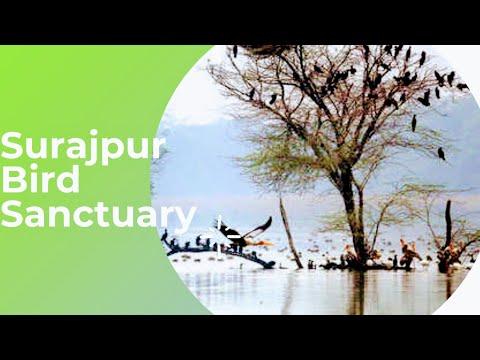 Wild and Free - 6 - Surajpur Bird Sanctuary Greater Noida