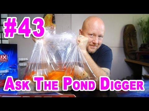 Goldfish Pond - Ask #43