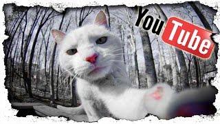 Die WAHRHEIT über Youtube - Wie Youtube funktioniert