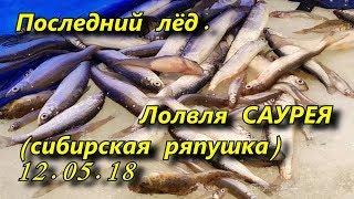 последний лёд  ловля саурея сибирской ряпушки 12 05 18