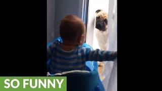 Giggling baby plays peekaboo with pug