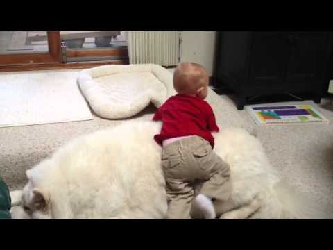 Baby climbs over top overweight dog