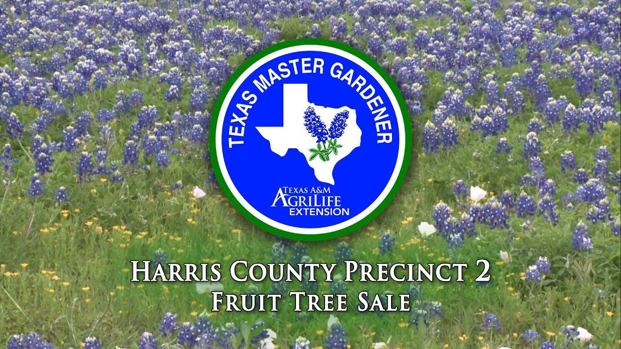 Master Gardeners Plant Sales Youtube