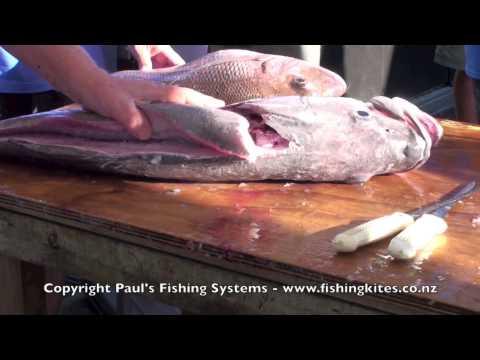 Skinning, Boning, Filleting Hapuku, Bass, Grouper, Wreckfish