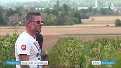 Rully : des détenus de Varennes-le-Grand participent aux vendanges