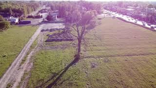 Mavic mini.Martwe drzewo