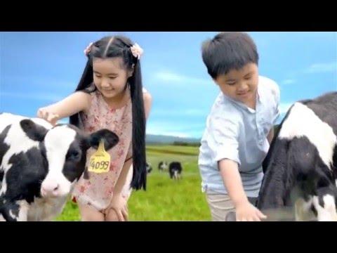 Quảng cáo Vinamilk – Giới thiệu trang trại bò sữa Vinamilk