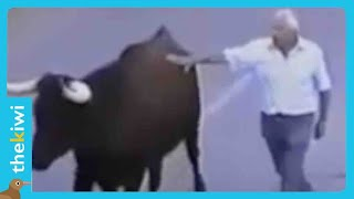 Heartbreaking reaction of bull when he recognizes his feeder
