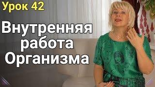 Внутренняя работа организма при похудении. ЕЛЕНА СТЕПАНОВА. ( Урок 42 )
