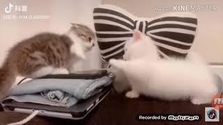 Hài động vật (tốp những clip hài về động vật)