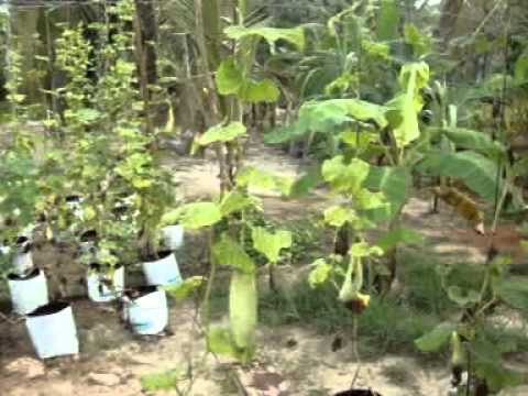 Organic Vegetable Home Garden Kit Youtube