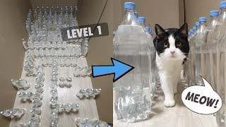 Mission Impossible. Bottle Maze With Water For The Cat. 3 Levels
