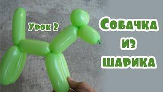 Урок 2. Собачка из шарика (как сделать своими руками)