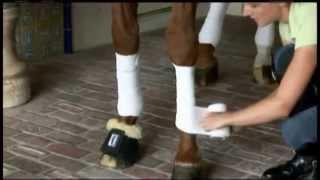 Защита ног спротивных лошадей