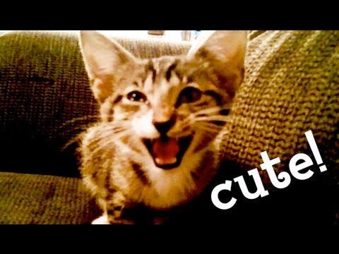 Super Cute Meowing Kitten has a Lot to Talk About
