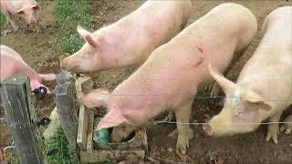 animaux de la ferme en Creuse