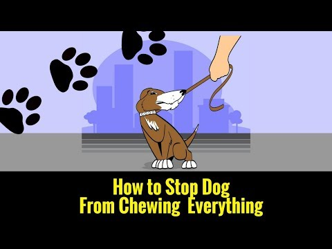 how-to-stop-dog-from-chewing-everything