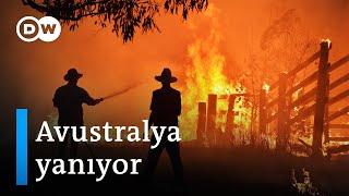 Avustralya'da 8 milyon hektar yandı, 500 milyon hayvan öldü - DW Türkçe