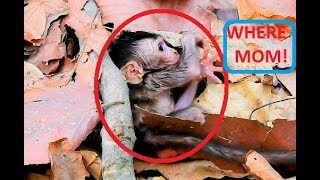 Million pity,Why mom Leyla leaves new born baby alone like this?innocent stays on ground with scare,