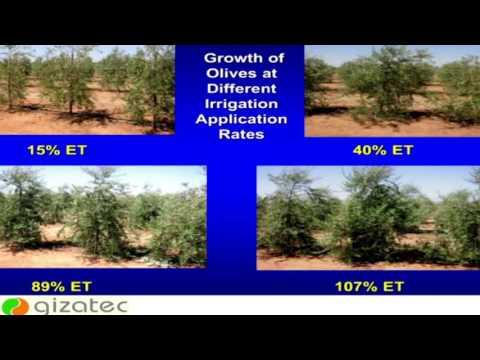 The scientific methods to reduce hazards of saline irrigation water. Mohamed Helal