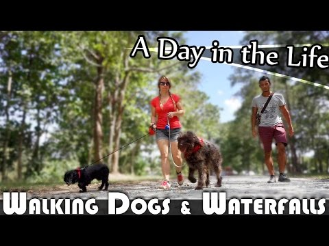 WALKING DOGS & WATERFALLS - LIVING IN THAILAND DAILY VLOG (ADITL EP121)