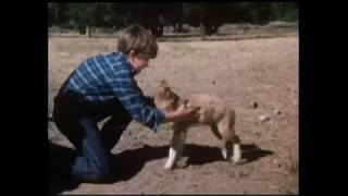 Lassie - Well Of Love (1970)