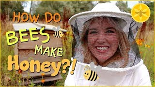 How do Bees make Honey? | Beekeeping with Maddie #13