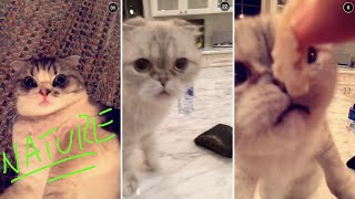 Calvin harris snapchats himself looking after taylor swift's cats - olivia & meredith! --- subscribe for from all of your favourite celebrities!htt...