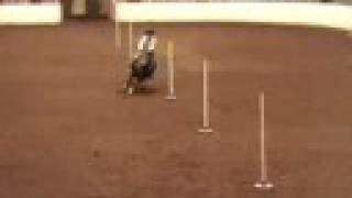 BarrelRacing- Bring it on Home