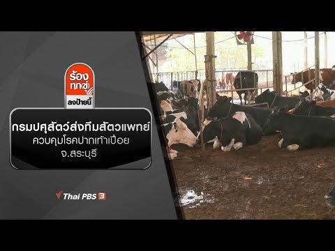 กรมปศุสัตว์ส่งทีมสัตวแพทย์ควบคุมโรคปากเท้าเปื่อย จ.สระบุรี - วันที่ 15 Jan 2020
